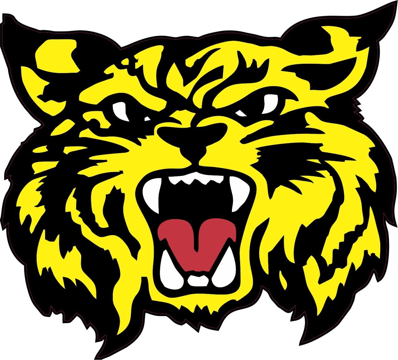 cougar bethune