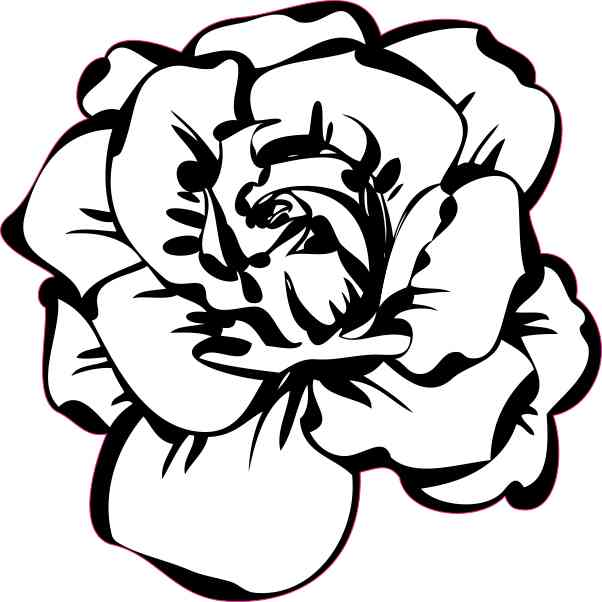 White Rose Sticker