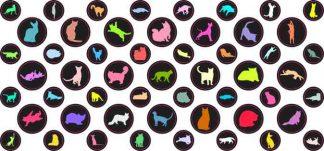 Colorful Cat Camera Dots